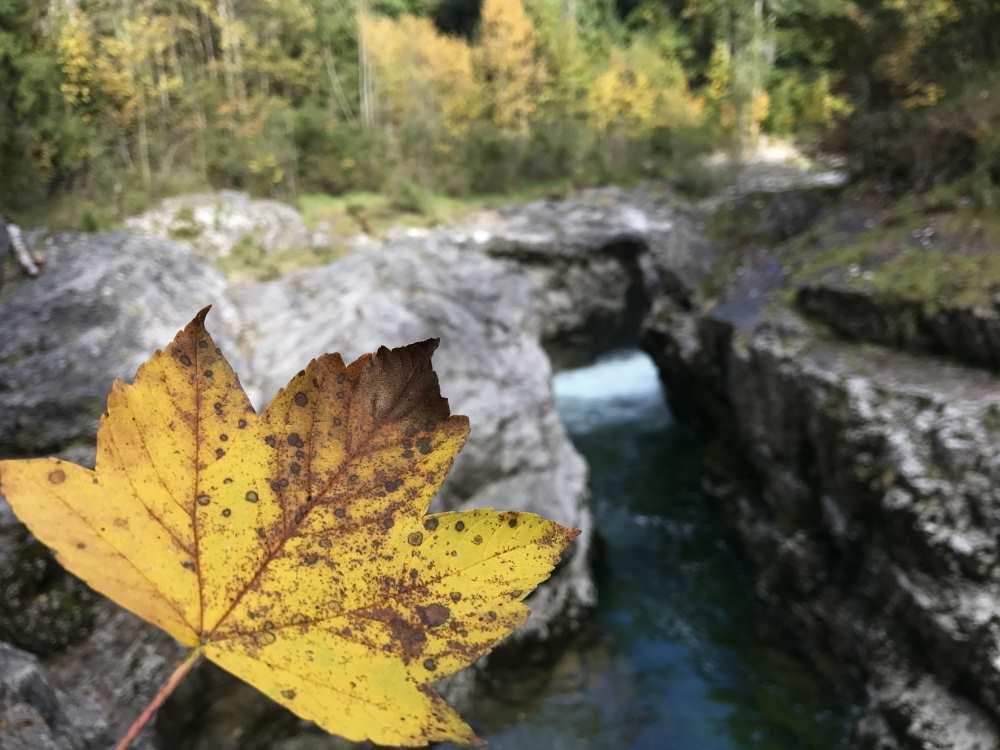 Herbst in Bayern am See: Bunt ist die Landschaft rund um den Sylvensteinsee im Herbst